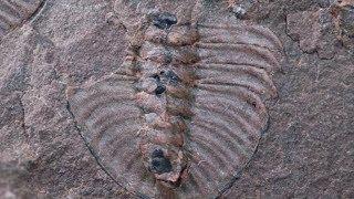 12 Strange Historical Unsolved Mysteries