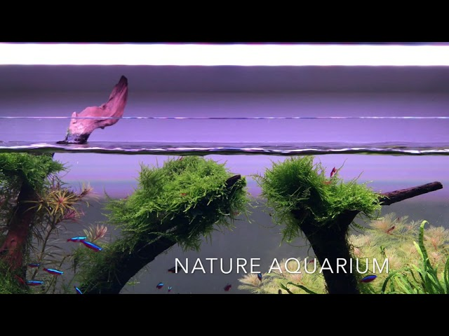 Aquascaper 900 Nature Aquarium - at Aquarium Gardens