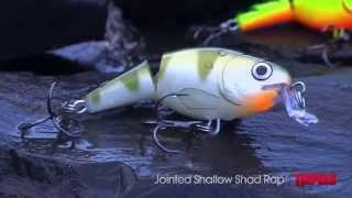 Rapala shallow shad rap jointed