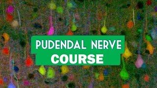 Pudendal nerve course