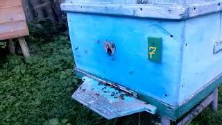 Мой новый канал о пчеловодстве.