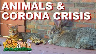 Animals and Corona Crisis