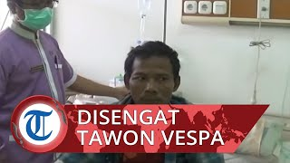 Disengat Tawon Vespa, Seorang Warga asal Klaten Jawa Tengah Dilarikan ke Rumah Sakit