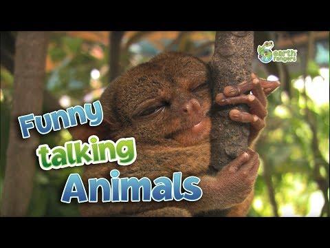 Khi động vật biết nói, ko thể nhịn được cười