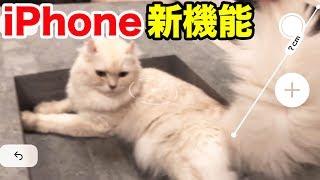 IPhone新機能でマロンの尻尾を測ったらやっぱり長かったwww
