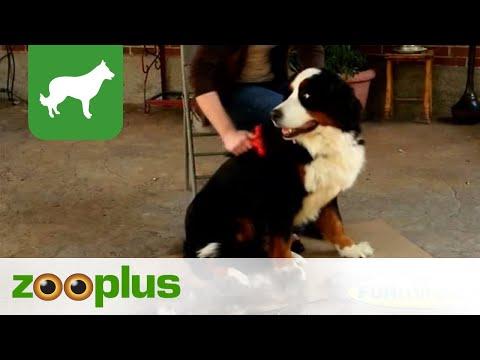 FURminator für Hunde