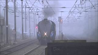 preview picture of video '4464 'Bittern' at Hanwell, 22/10/12.'