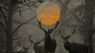 Anorevo - My automne