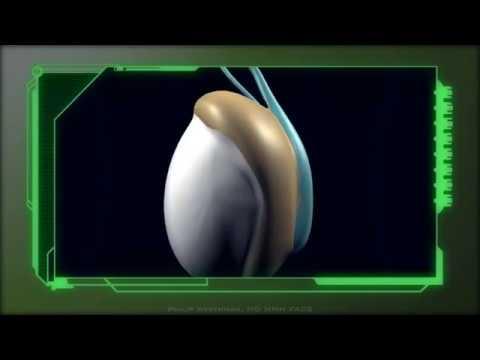 Kao što je prostata je povezana sa sposobnošću