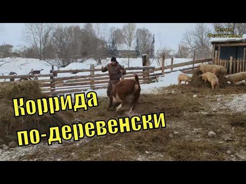 Про Бийск. Уколы. Работа с тёлками/ Семья Фетистовых