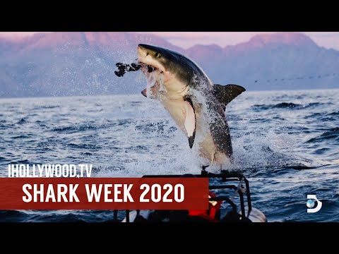 Shark Week 2020 Preview on Discovery Channel with Jeff Kurr | Shark Week