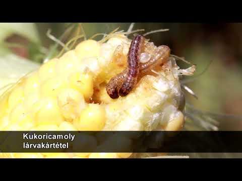 Hemotest paraziták