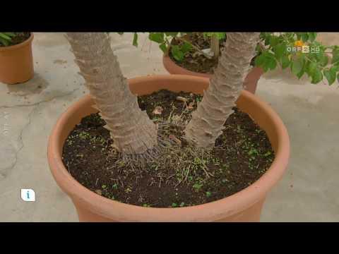Überwinterung mediterraner Pflanzen