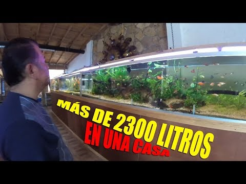 7 IMPRESIONANTES Acuarios en UNA sola CASA!