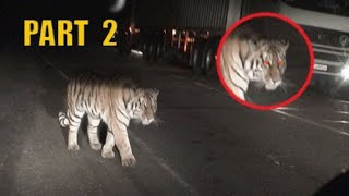The most incredible encounters with wild animals on the road, part 2
