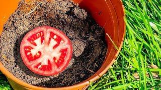 20 SUPERB PLANT ARTS AND HACKS