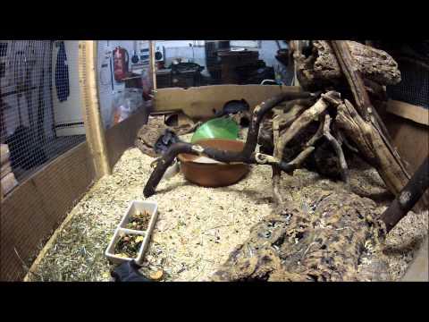 mit der GoPro HD Hero2 im Chinchilla Käfig