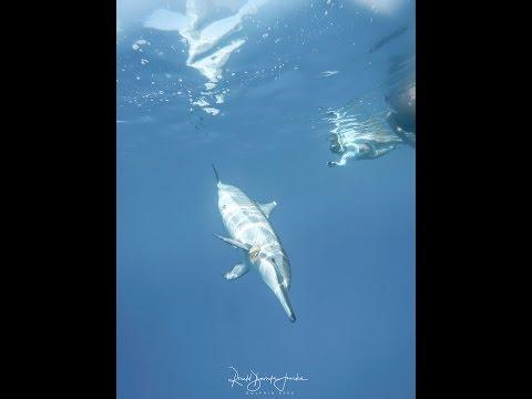 Dolphin Eyes Happy Dolphin