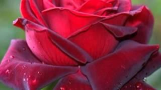 Tere Hoton Pe [Full Song] (HD) - Naam Kya Hai - YouTube