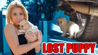 WE RESCUED A LOST PUPPY! (FOUND UNDER CAR)