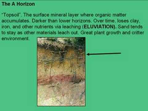 Soil horizons and profiles ck 12 foundation for What is important to know about soil layers