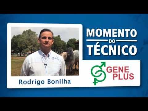 Momento do Técnico Rodrigo