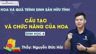 Cấu tạo và chức năng của hoa – Sinh học 6 – Thầy Nguyễn Đức Hải