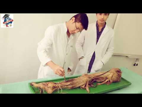 Moderatamente espresso alterazioni degenerative-distrofici della colonna vertebrale toracica