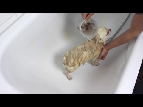 Wie wird ein Hund gebadet? Ohne Shampoo? OMG!!!