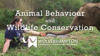 Studying STEM - Animal Behaviour and Wildlife Conservation