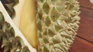 มาอีกแล้วครับคุนพี่คิวที่6จัดไป6ลูก ได้เนื้อเหลืองเปลือกบางมาก ทุเรียนเฮียรักษ์ ตลาดธรากร 16/07/62
