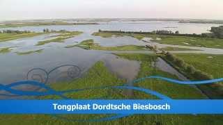 Tongplaat Dordtsche Biesbosch met drone