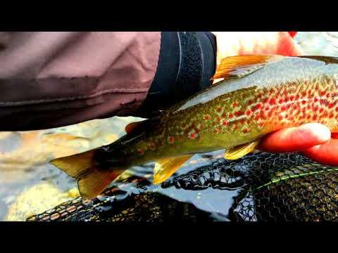 Guardare in linea la pesca da una pesca con la mosca