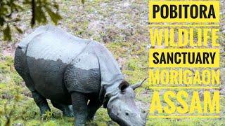 preview picture of video 'Pobitora || Wildlife Sanctuary || Assam || INDIA'