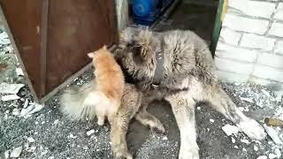 Дружба собаки и кошки