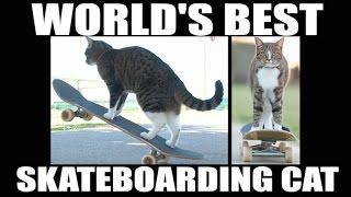 Кот-скейтбордист стал новой звездой Интернета