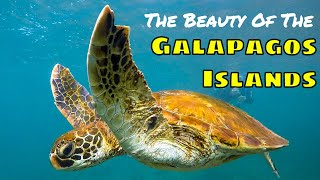 THE GALAPAGOS ISLANDS in 3 Minutes!!!