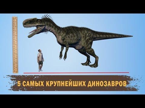 5 САМЫХ КРУПНЕЙШИХ ДИНОЗАВРОВ /5 OF THE LARGEST DINOSAURS IN THE WORLD/