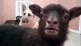 Смешные собаки, Смешное видео о собаках 2018#10