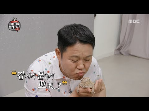 [HOT] lizard offended by a sudden kiss attempt, 마이 리틀 텔레비전 V2 20190719