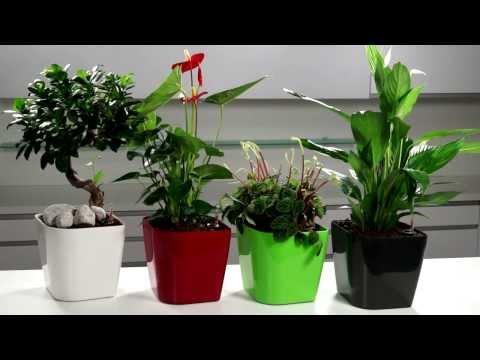 Video TESCOMA samozavlažovací květináč SENSE 2