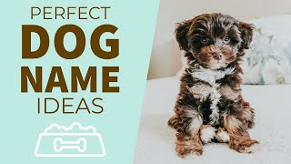 How to choose the perfect dog name