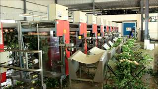 preview picture of video 'Largest Chinese Rose and Anthurium Flower production farm'
