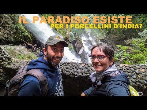 Il paradiso esiste per i Porcellini d'India?