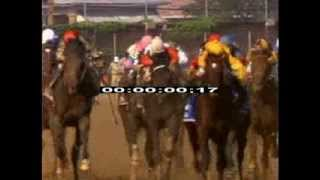 Winning - Horse Racing - Finish Line - Stock Footage - Equestrian Sport - Racing - First Place