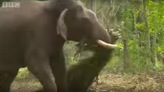 Elephants Hold Grudges? | Ultimate Killers | BBC