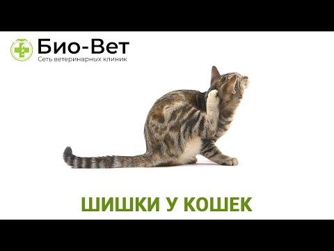 Шишки у кошек. Ветеринарная клиника Био-Вет.