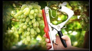 Степлер для подвязки винограда видео