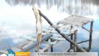 Озеро полянское нижний новгород рыбалка