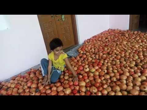 Progressive Farmer from Rajasthan- Rajnish Lambha ( Hardev Baag & Udhyan Nursery) - 5